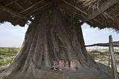 Tanrı'nın orman tapınağı — Stok fotoğraf