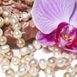 Oysters pearls necklace and orchid flower — Stock Photo #14400731