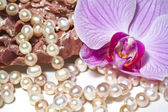 Oysters pearls necklace and orchid flower — Stock Photo