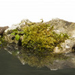 Grass and rock along water — Stock Photo