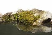 Gräs och rock längs vattnet — Stockfoto