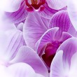 Artistic bouquet of purple orchid flowers — Stock Photo #19020409