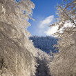 Mountain forest path way in snowy winter with ice trees — Stock Photo
