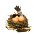 Bird nest with eggs feathers, isolated in white background, studio image — Stock Photo