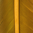 Graphic detail of yellow feather — Stock Photo
