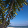 Coconut tree on white sand beach in Thailand — Stock Photo