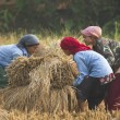 Unidentified teenagers working in field in Terai, Nepal — Stock Photo #36396673