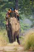 Elephant safari in Bardia National Park — Stok fotoğraf