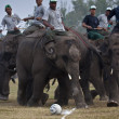 Elephant football - Elephant festival, Chitw2013, Nepal — Stock Photo #40330575