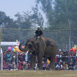 Elephant football - Elephant festival, Chitw2013, Nepal — Stock Photo #40331373