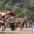Horse cart race - Elephant festival, Chitw2013, Nepal — Stock Photo #40398827