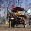 Horse cart race - Elephant festival, Chitw2013, Nepal — Stock Photo #40399445