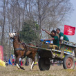 Horse cart race - Elephant festival, Chitw2013, Nepal — Stock Photo #40401625
