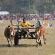 Elephant festival, Chitw2013, Nepal — Stock Photo #40454335