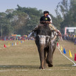 Elephant race -  festival, Chitw2013, Nepal — Stock Photo #41257319