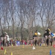 Elephant race -  festival, Chitw2013, Nepal — Stock Photo #41257523