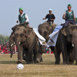 Football game - Elephant festival, Chitw2013, Nepal — Stock Photo #41258897