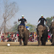 Football game - Elephant festival, Chitw2013, Nepal — Stock Photo #41259093