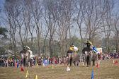 Elephant race -  festival, Chitwan 2013, Nepal — Stock Photo