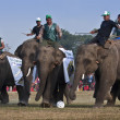 Football game - Elephant festival, Chitw2013, Nepal — Stock Photo #41971111