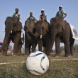 Football game - Elephant festival, Chitw2013, Nepal — Stock Photo #41971359