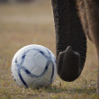 Detail of football game during Elephant festival, Chitw2013, Nepal — Stock Photo #41975741