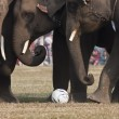 Detail of football game during Elephant festival, Chitw2013, Nepal — Stock Photo #41976071