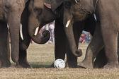 Detail fotbal během sloní festival, chitwan 2013, nepál — Stock fotografie