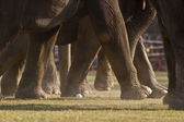 Close-up of elephant polo in Nepal — Stockfoto
