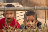 Two Young nepali boys playing in hay cart in Nepal — Foto Stock