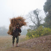 Taru man carrying grass from jungle to renew their roof house in Bardia, Nepal — Stock Photo