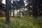 Misty forest in backlight — Stock Photo