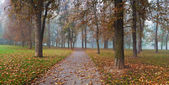 Panorama of path through a foggy forest — Stock Photo