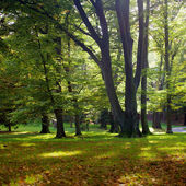 Sunlight in park with trees and green grass — Stock Photo