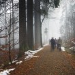 Panorama of walkers in misty forest at autumn — Stock Photo