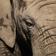 African elephant eye — Stock Photo #19270801
