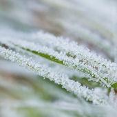 Frozen green grass — Stock Photo