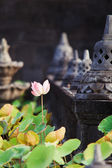 Lotots flower in buddhist temple — Stok fotoğraf