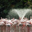 Flamingoes and water fountain — Stock Photo