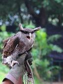 Owl and handler — Stock Photo