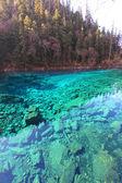 Five colors lake in Jiuzhaigou — Stock Photo