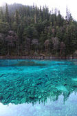Five colors lake in Jiuzhaigou front view — Stock Photo
