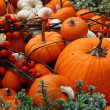 Pumpkins galore — Stock Photo