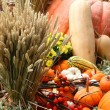Harvest time — Stock Photo