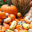Pumpkins and wheat — Stock Photo