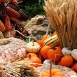Pumpkins, corn and wheat — Stock Photo