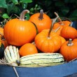Pumpkins on barrel — Stock Photo