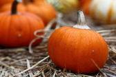 Orange pumpkin with pumpkin background — Stock Photo