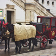 Sightseeing horse-drawn carriage ride in Vienna. — Stock Photo