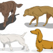 Set of dogs in action on white background - Stock Vector